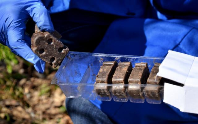 В дубненских лесах и парках разложат вакцину от бешенства для диких животных